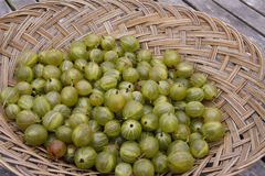 Green gooseberries Royalty Free Stock Photo