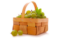 Green gooseberries. Stock Images