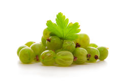 Green gooseberries. Stock Photography