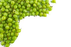 Green gooseberries isolated on white background. royalty free stock photo