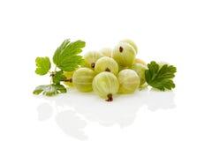 Green gooseberries. Stock Photography