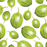 Green gooseberries pattern seamless Royalty Free Stock Images