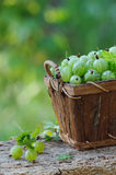 Green gooseberries in a wooden basket outdoor Royalty Free Stock Images