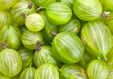 Green gooseberry Stock Photography