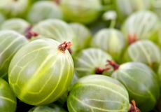 Green gooseberry background Stock Image