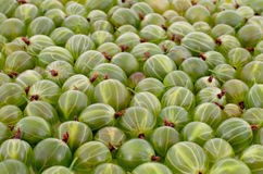 Green gooseberry background Stock Images