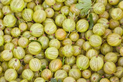 Green gooseberry background Royalty Free Stock Image