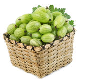 Green gooseberry  in a basket Stock Images