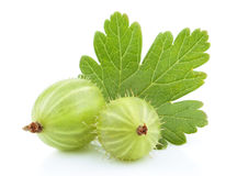 Green gooseberry fruit with leaf on white Stock Images
