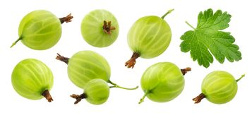 Green gooseberry isolated on white background, collection. Gooseberry isolated on white background with clipping path, collection stock images