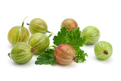 Green gooseberry with leaf Stock Image