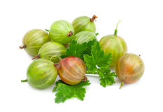 Green gooseberry with leaf Royalty Free Stock Photo