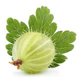 Green gooseberry with leaf on white Royalty Free Stock Photos