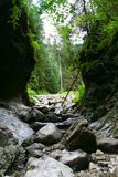 Green Gorge. This green gorge was very lush beautiful and found in the Zakopane national park stock photography