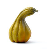 Green gourd on white royalty free stock photography