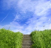 Green gräs arkivbild