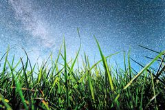 Green rice fields and Star night stock photography