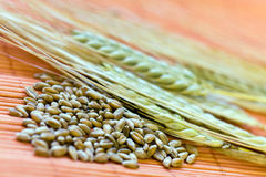 Green grain ready for harvest growing in a farm fi Stock Photo
