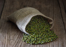 Green gram or mung bean Stock Images