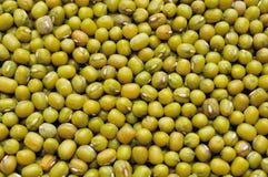 Green grams. Close up of green grams Royalty Free Stock Photo