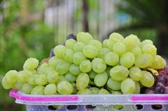 Green grape. A bunch of green grape in basket Royalty Free Stock Photography