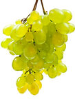 Green grape Stock Images