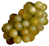 Green Grape. High detailed illustration Stock Photo