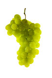 Green grape. Cluster on white background Royalty Free Stock Image
