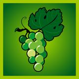 Green grape bunch Stock Image