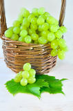 Green grape bunch  in basket and leaves on wooden table Stock Images