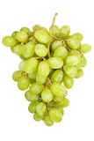 Green grape cluster. Isolated oi white Royalty Free Stock Photo