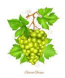 Green grape cluster with green leaves. Royalty Free Stock Photo