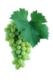 Green grape cluster with leaf Royalty Free Stock Photo