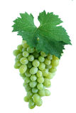 Green grape cluster with leaf Stock Photos