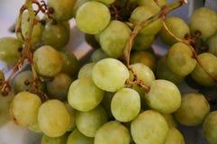 Green grape fruit Royalty Free Stock Photos