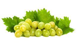 Green Grape and Grapevine with Green Leaves. Isolated on White Background Stock Photography