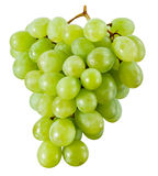 Green grape isolated. With clipping path Stock Images