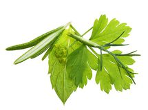 Green grape isolated Stock Photo