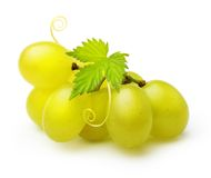 Green grape isolated Stock Photography
