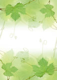 The green grape leaf border Stock Images