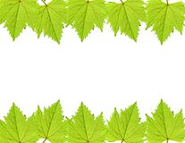 Green grape leaf frame Royalty Free Stock Image