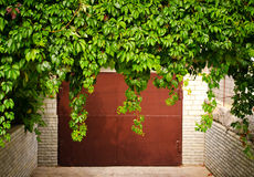 Free Green Grape Leaves Above Old Garage Door As Frame, Vintage Style Royalty Free Stock Photo - 78444155