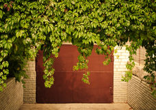 Green grape leaves above old garage door as frame, vintage style Royalty Free Stock Photos