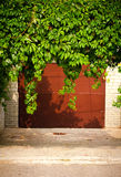 Green grape leaves above old garage door as frame, vintage style Stock Image