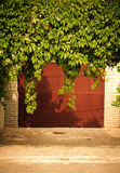 Green grape leaves above old garage door as frame, vintage style Royalty Free Stock Images