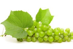 Green grape with leaves and water drops closeup Royalty Free Stock Photos