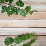 Green grape leaves Royalty Free Stock Photography