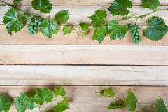 Green grape leaves Stock Photography