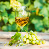 Green grape and one glass of white wine in the vineyard Royalty Free Stock Photos