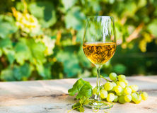Green grape and one glass of white wine in the vineyard Royalty Free Stock Image